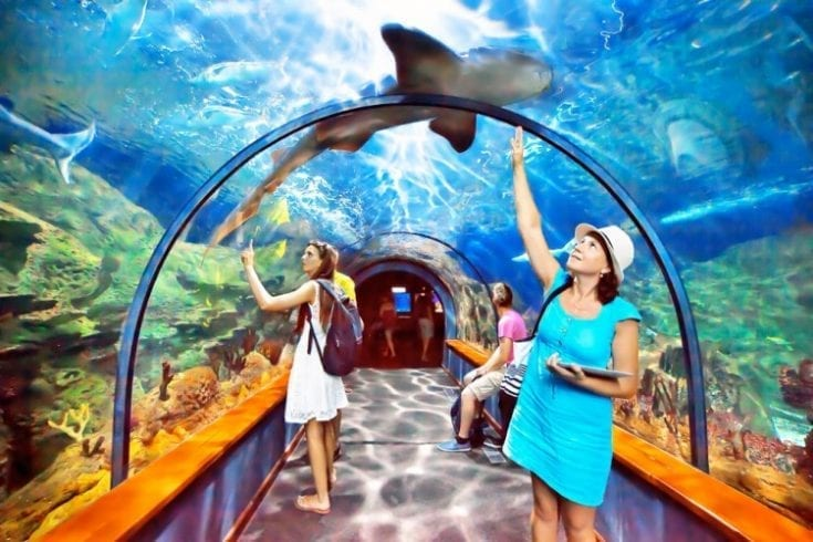 aquarium-211234159