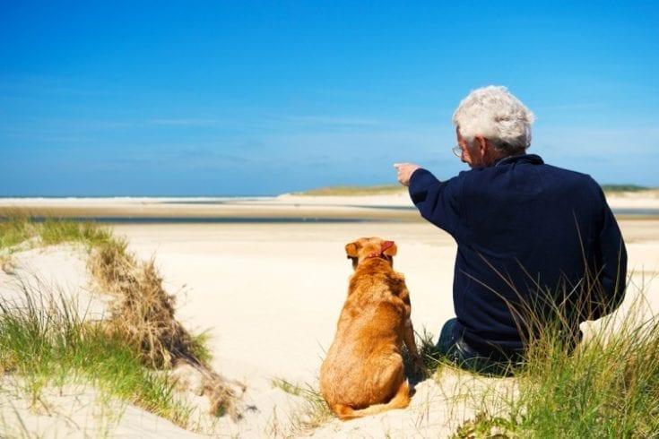 dogs-good-health-142043056