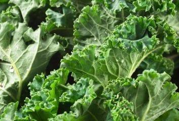 6 Reasons to Eat Kale 1
