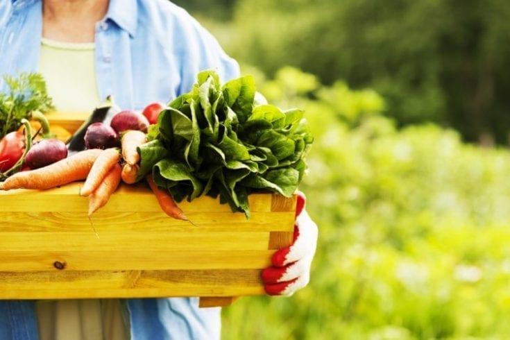 organic-food-126744209
