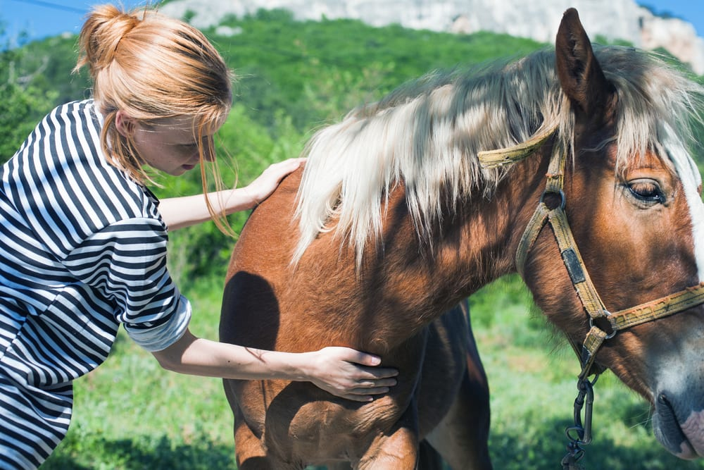 horses to reduce stress