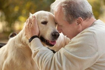 dogs Alzheimer's dementia